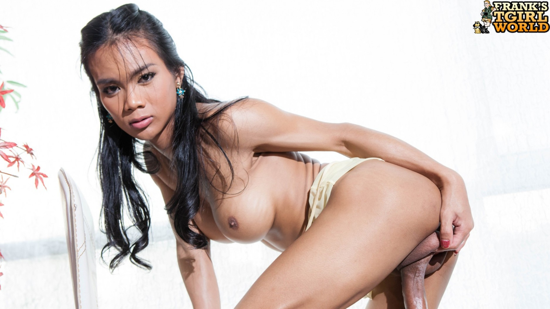 Excellent Asian hung franks tgirl world consider